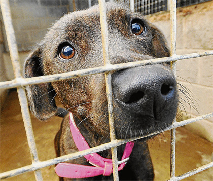 Dog-Rescue-And-Adoption1