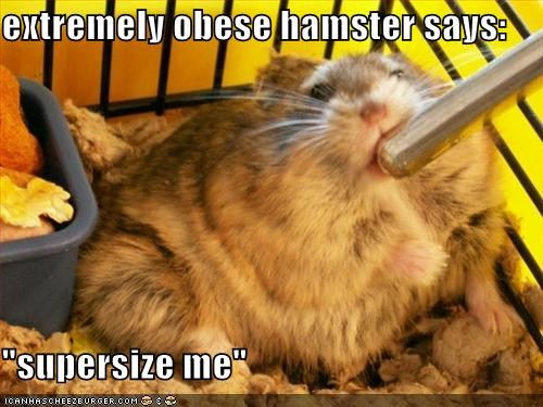 Image Result For Teddy Bear Hamster