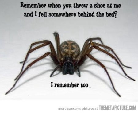 funny-scary-spider-creepy